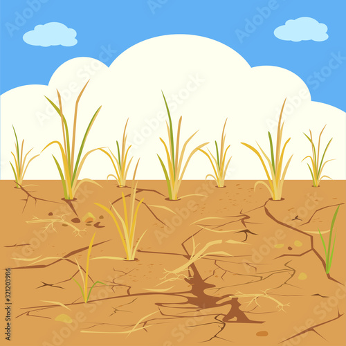 Arid - vector of dried fields rice. Poster Mural XXL