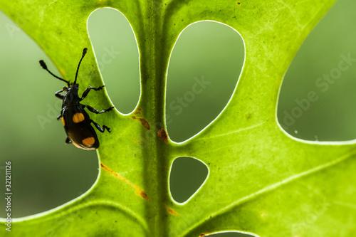 Fotomural Leaf and Bug