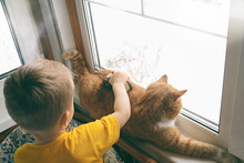 Kid And Pet Playing Together At Home. Red Ginger Tabby Cat Lying On Window Sill And Little Toddler Boy Is Rolling A Toy Car On It. Domestic Animals And Child. Cozy Scene, Hygge, Lifestyle. Copy Space.