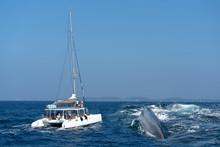 Whale Back And Tourist Yacht O...