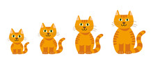 Isolated Vector Graphic Illustration Of A Cute Smiling Orange Cartoon Cat With Green Eyes Growing Up Including A Set Of Different Ages
