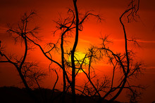 Burnt And Blackened Branches A...