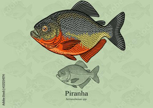 Obraz na plátně Piranha