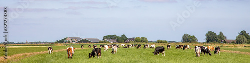Stampa su Tela Herd of pasture cows in a wide Dutch landscape peaceful and sunny with a blue sky on the horizon