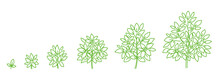 Tree Plant Growth Stages. Deve...