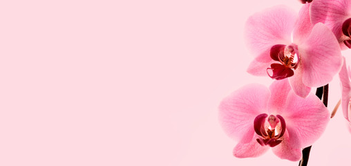 Closeup of bloom pink orchid flower border design.