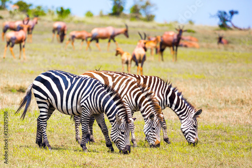 Tsessebe antelopes and zebras