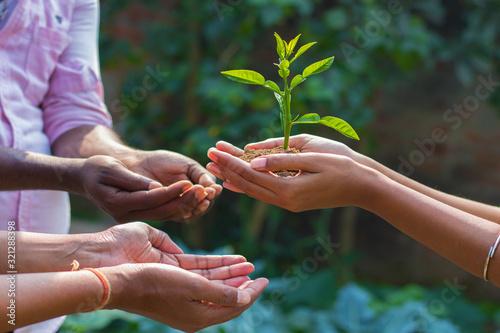 Fototapeta a lady is giving plant towards a man to promote plantation  obraz na płótnie