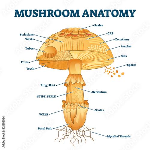Mushroom anatomy labeled biology diagram vector illustration Canvas Print