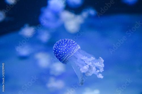 Photo meduza