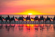 Camel Safari At Sunset At Cabl...