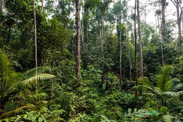 Panel Szklany Podświetlane Las BORNEO, MALAYSIA - SEPTEMBER 6, 2014: Feeding platform in the forest