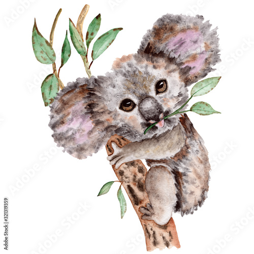 recznie-rysowane-akwarela-koala-portrai
