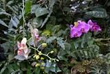 Kwitnące storczyki