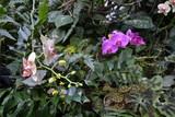Kwitnące storczyki i zielone liście, palmiarnia w Poznaniu
