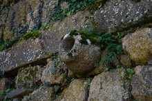 Capela Abandonada
