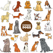 Cartoon Purebred Dog Character...