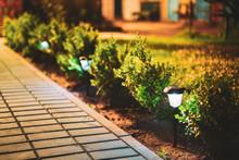 Night View Of Flowerbed Illumi...