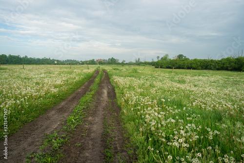 Fototapeta polna droga i łąka pełna dmuchawców wiosenny poranek obraz