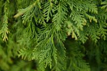 Closeup Of Beautiful Green Lea...