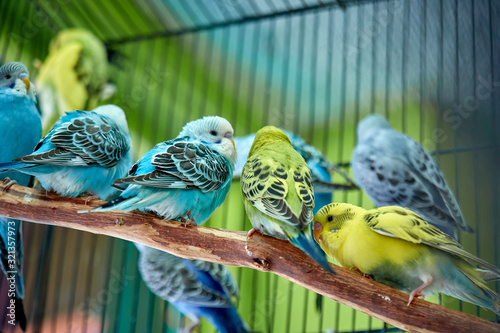 Close up of small caged colorful birds in pet store in morning sun © Michael