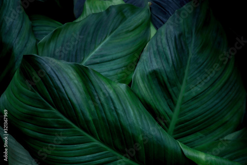 Fototapety, obrazy: green abstract background