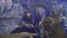 Cuttlefishe ändern Farbe