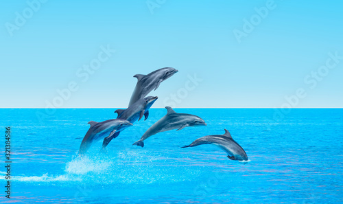 Group of dolphins jumping on the water Wallpaper Mural