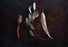 Dry Leaves And Magnolia Seedpod