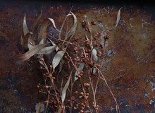 Eucalyptus Leaves With Seedpods On Metal Background