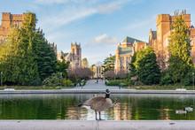 Adorable Duck In University Of...