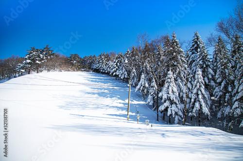 Fotografía 겨울 나무에 눈이 쌓여있는 풍경