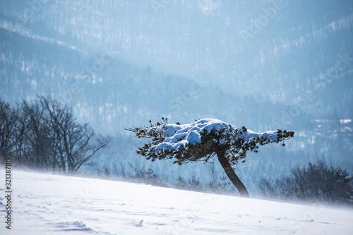 Cuadros en Lienzo 겨울 눈내린 풍경