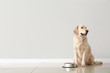 Cute dog and bowl with food near light wall