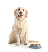 Cute Dog Near Bowl With Food On White Background
