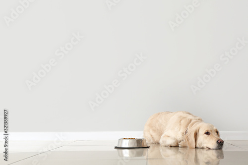 Obraz Cute dog and bowl with food near light wall - fototapety do salonu