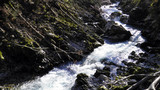 Vintgar Gorge or Bled Gorge and Radovna River (Soteska Vintgar ali Blejski vintgar in reka Radovna) - Zgornje Gorje, Slovenia