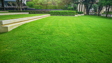 Smooth And Fresh Green Grass L...