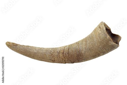Cuadros en Lienzo asian buffalo horn isolated on white background