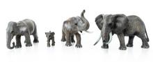 Elephant Family  Isolated On W...