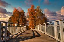 Path Leading Into Autumn Color...