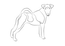 Smooth Fox Terrier. Vector Out...