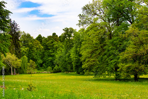 Foto Meadow with green grass and trees in Zamecky Park in Hluboka Castle (Hluboka nad