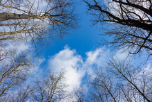 Trees With Fallen Foliage Against A Blue Sky With Clouds