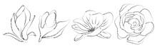 Vector Set Of Hand Drawn Plants. Botanical Sketched