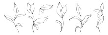Vector Set Of Hand Drawn Plant...