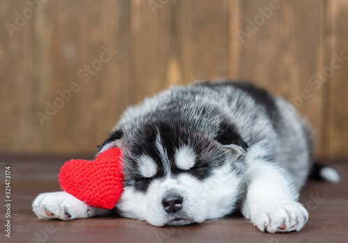 obraz PCV Cute siberian husky puppy sleeps with red heart. Empty space for text