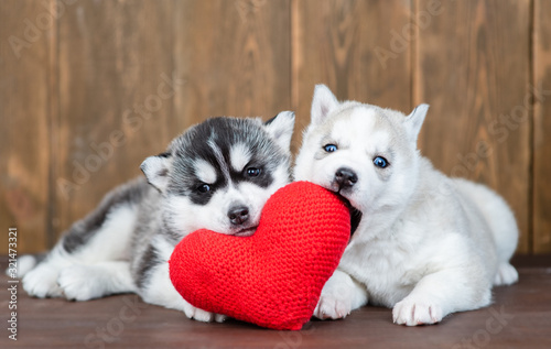 obraz PCV Two playful siberian husky puppies lie with red heart