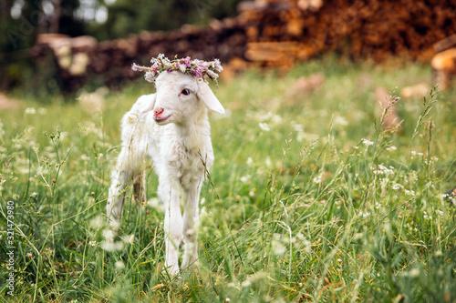 Obraz na płótnie Baby lamb with flower crown