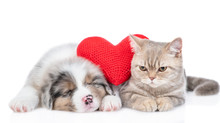 Red Heart Lies Between Australian Shepherd Puppy And Cat. Valentines Day Concept. Isolated On White Background